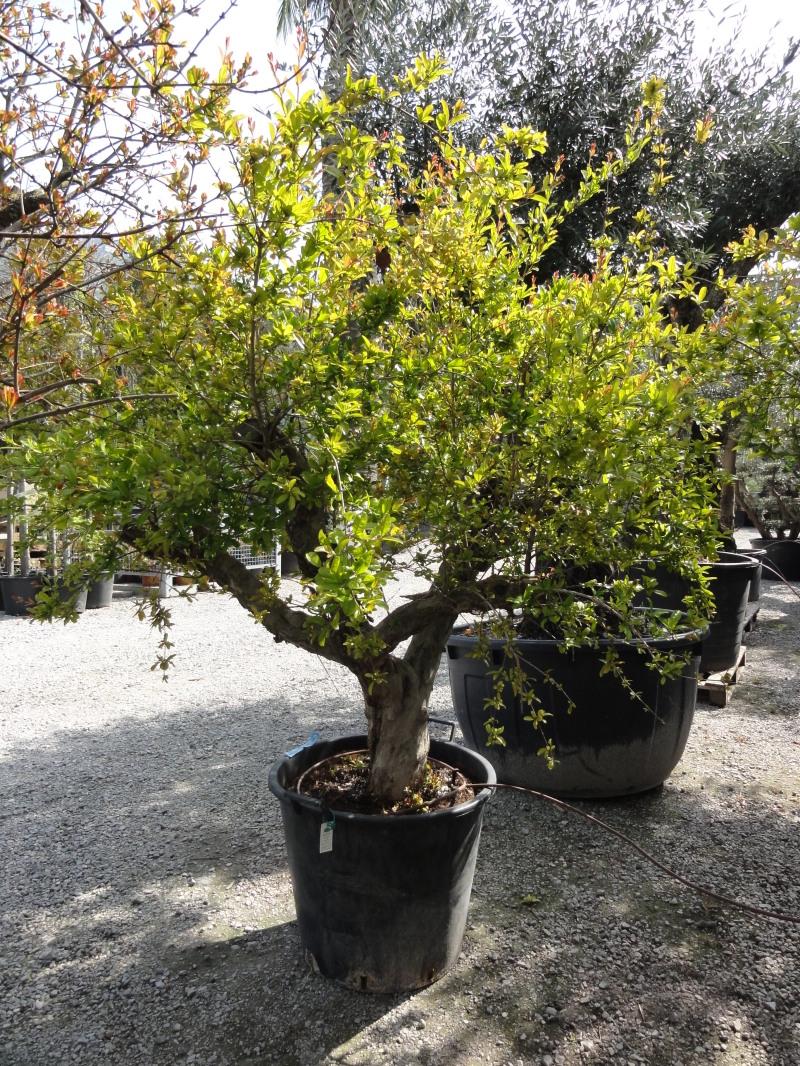 Search results piante da frutto e prezzi for Alberi da frutto prezzi